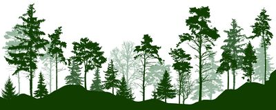 Forest silhouette green trees. Coniferous evergreen forest, park, alley. Vector illustration stock illustration