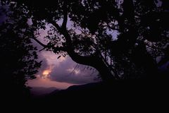Forest Silhouette mit Bäumen während des Sonnenuntergangs, Indien stockbild
