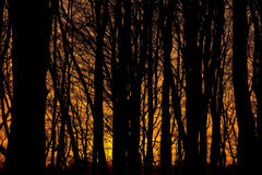 Forest silhouette sunset Stock Images