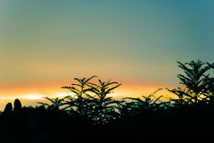 Forest on Silhouette sunset scene background Stock Image