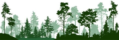 Forest silhouette trees. Evergreen coniferous forest with pines, fir trees, christmas tree, cedar, Scotch fir. Vector