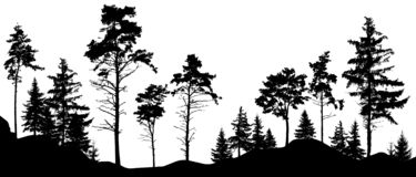 Forest silhouette trees. Vector illustration. Trees isolated from each other, free-standing.  stock illustration