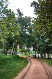 Forest in the Simon Bolivar Park Royalty Free Stock Photos