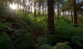 Within the forest. The forest of Sintra, Portugal Stock Photo