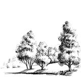 Forest sketch Royalty Free Stock Photography