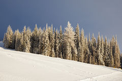 Forest skiing country Royalty Free Stock Image