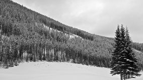 Forest On Skiing Slopes in Winter Royalty Free Stock Image