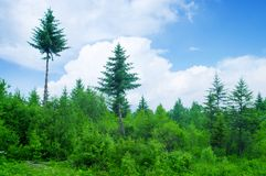 Forest and sky Royalty Free Stock Images