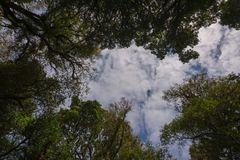 Forest and sky in ant view. Background, sky, nature, forest, outdoor, natural, plant, green, beautiful, tree, park, summer, leaf, bright, view, branch, landscape royalty free stock images