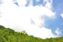 Forest and sky Stock Photos