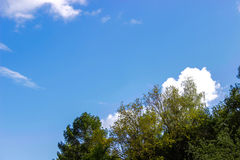 Forest and sky. Green forest and blue sky Stock Image