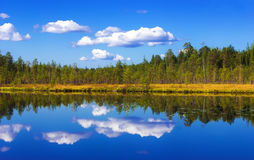 Forest And Sky Reflection. Summer landscape -  pure lake with forest and sky reflection on a water at sunny day. Russia, Republic of Karelia Royalty Free Stock Photo