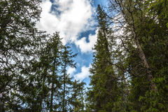 Forest sky. In Slovak Tatra Mountains Royalty Free Stock Photo