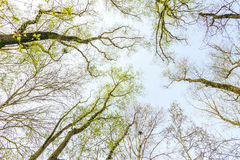Forest and Sky with Sun Royalty Free Stock Photos