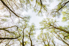 Forest and Sky with Sun Royalty Free Stock Images