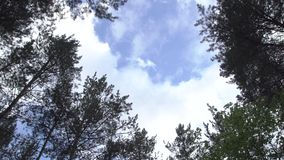 Forest Sky Through Trees stock video footage