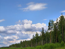 Forest skyline Royalty Free Stock Photos