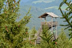 Forest Skywalk  in  Austria Royalty Free Stock Photo