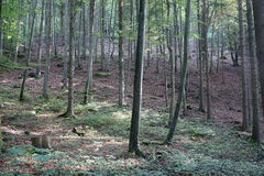 Forest on the slope Royalty Free Stock Photography