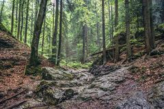 Forest in Slovak Paradise. Path of the Sucha Bela hiking trail in park called Slovak Paradise, Slovakia royalty free stock images