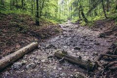 Forest in Slovak Paradise. Path of the Sucha Bela hiking trail in park called Slovak Paradise, Slovakia stock image