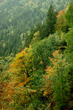 Forest in Slovenia. This picture of the forest in Slovenia was taken in the fall season Royalty Free Stock Photo
