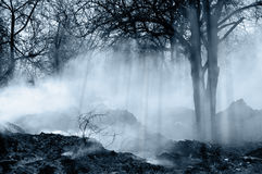 Forest with smoke Stock Photo