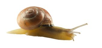 Forest Snail Lizenzfreies Stockbild