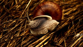 Forest Snail almacen de video