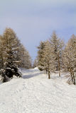 Forest with snow Royalty Free Stock Image
