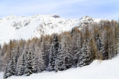 Forest with snow Royalty Free Stock Photo