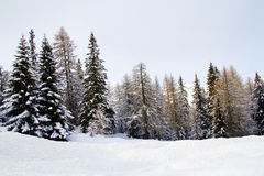 Forest with snow Stock Image