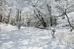Forest with snow Stock Photo