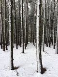 Forest snow stock images