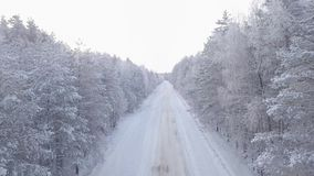 Forest snow-covered road. Flying camera from bottom to top to tree top. See the horizon stock footage