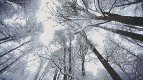 Forest with snow covered trees stock footage