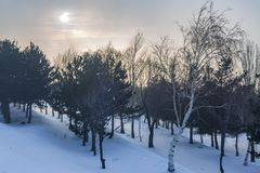 Forest with snow in Erzurum, turkey. With mist royalty free stock photography