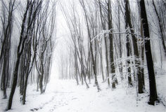 Forest with snow, fog and frozen trees. Forest with snow, fog and haze between frozen trees in winter Stock Images