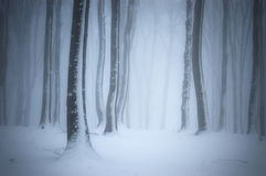 Forest with snow, frost and fog in winter Stock Image