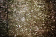 Forest snow Royalty Free Stock Photos