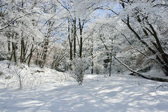 Forest with snow Stock Photography