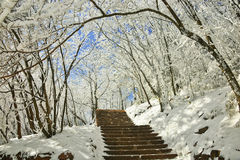 Forest with snow Royalty Free Stock Photos