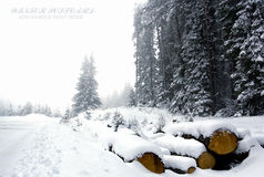 Forest snow landscape Royalty Free Stock Photos