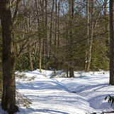 Forest snow magic. Royalty Free Stock Images