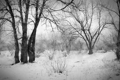 Forest in snow Royalty Free Stock Photography