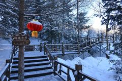 The forest of Snow Village in Heilongjiang Stock Photos