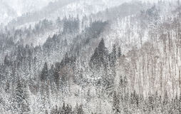 Forest Snowfall Stock Photography
