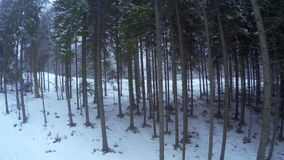 Forest and Snowfall stock footage