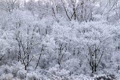 Forest Snowfall Landscape Illinois Imágenes de archivo libres de regalías