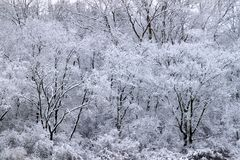 Forest Snowfall Landscape Illinois. Snowfall covers a dense forest of northern Illinois Royalty Free Stock Images